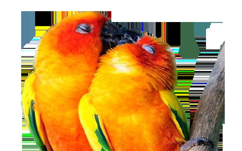 I żyli długo i szczęśliwie – czyli jak to jest z tą miłością